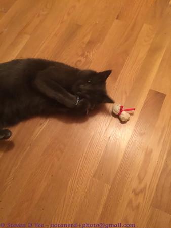 20151125 - catnip