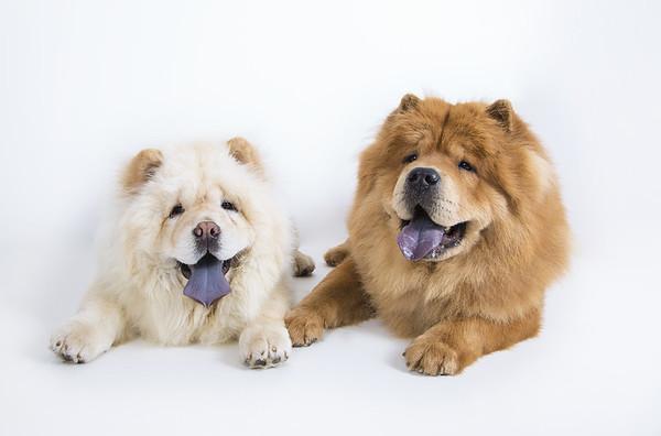 Zac & Belle