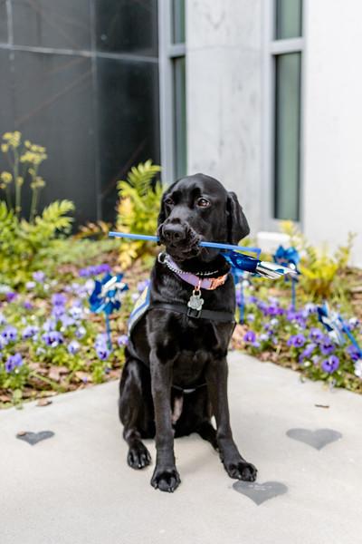 Dee Norton Service Dog Braelynn