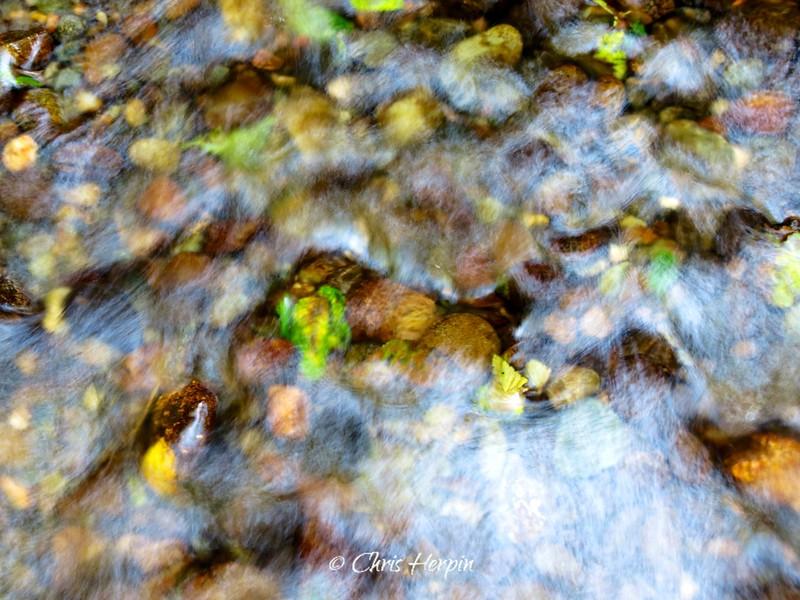 Fern Canyon - Redwood National Park