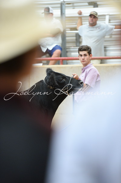 Steer Ringshots - Exotics and Grand Drive