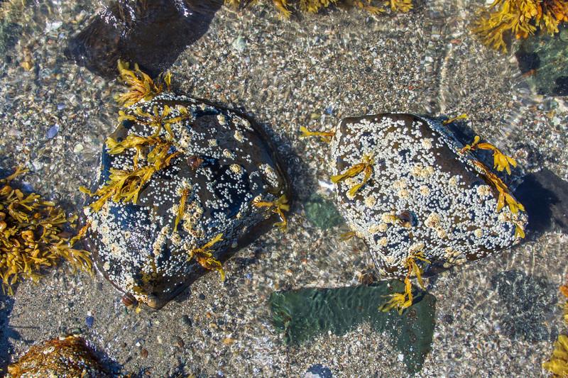 Rocks-beach-seaweed.jpg
