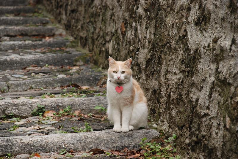 Local feline in Bellagio