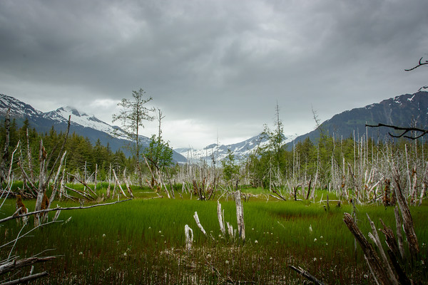Dredge Lake Area, Juneau, AK