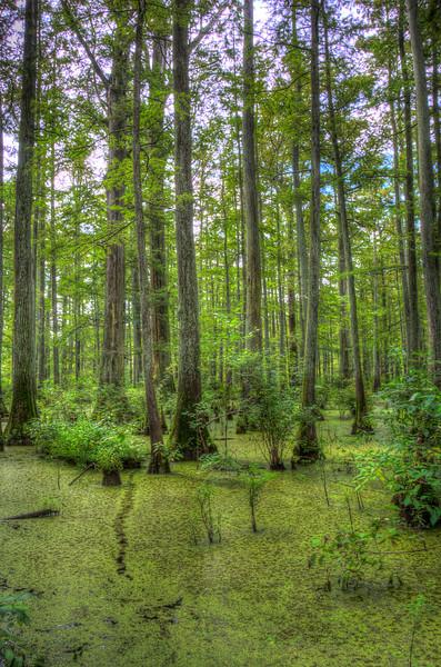 Southern Illinois Cypress SwampVerticalPurpleskyDSC_8163_4_5_tonemapped.jpg