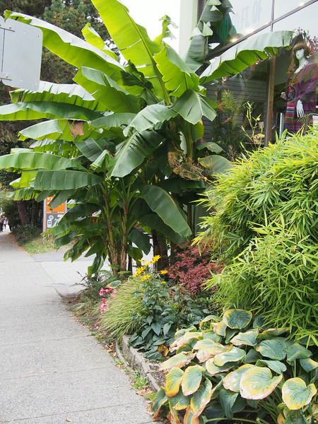 "Oct. 19/13 - ""The Urban Garden"" store on Hornby Street, near 910 Beach Apartment Hotel"