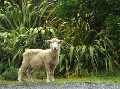 NZ: Rainy Day French Pass