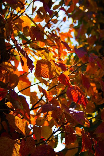 10-8-11 Fall Colors