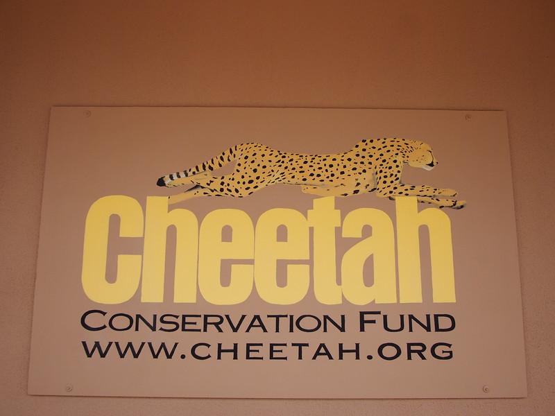 P3271017-cheetah-dot-org.JPG