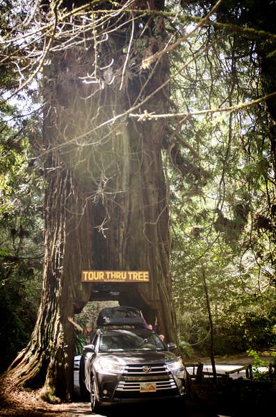 20180401_Redwoods_1002.jpg