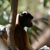 Madagascar 2017 (49)