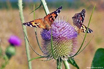 Butterflies & Moths. Set 4