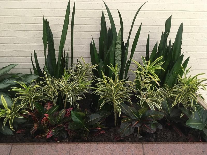 Glenbrook planter 2018 2.jpg