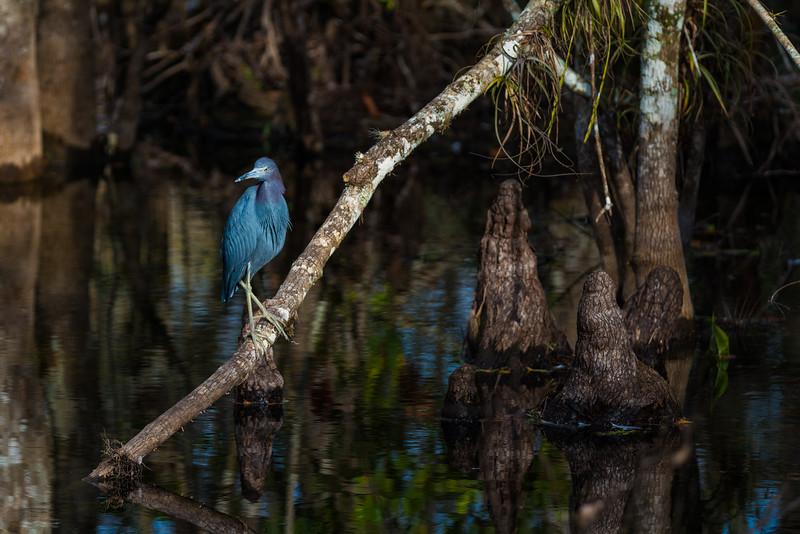 Everglades (10 of 60).jpg