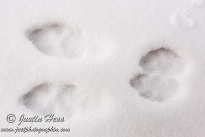 Rabbit Tracks 12-30-2014