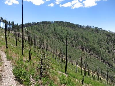 Ward Peak - Jun. 16, 2012