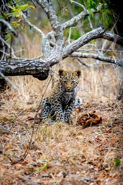 Zuid Afrika 2015 164.jpg