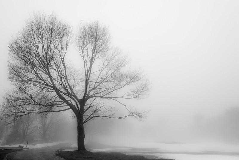Majestic in Mist_.jpg