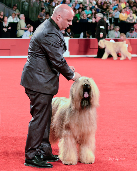 Briard - GCHB CH Majestique Just My Style