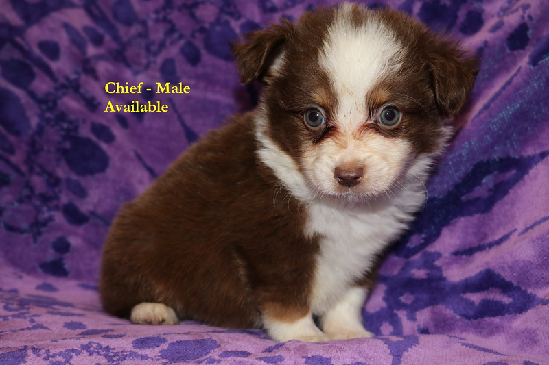 Chief has been reserved as of 8/8/19