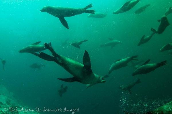 Montaque Island and Merimbula, NSW