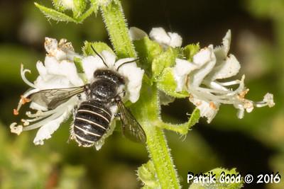 Meterbox Carder Bee