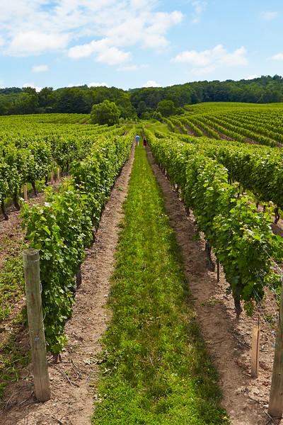niagara falls vineyard.jpg