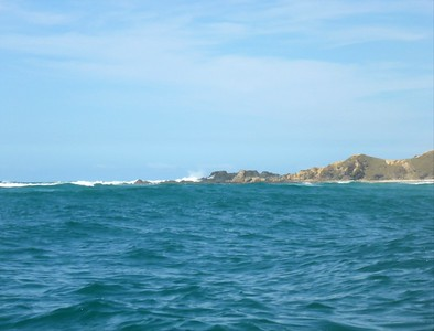 Whales and Dolphins at Byron bay