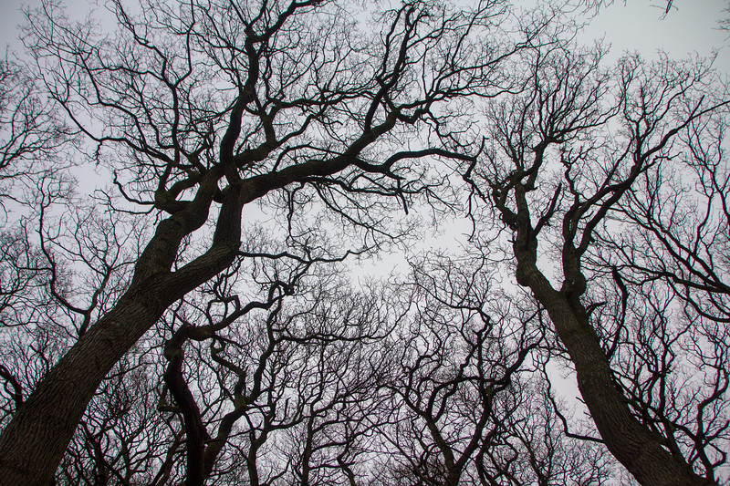 The Dark Trees
