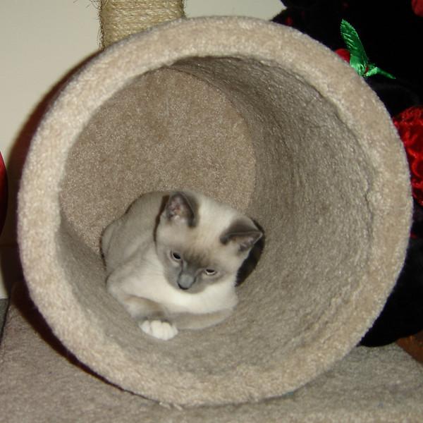 2007 06 22 - Cats 26.JPG