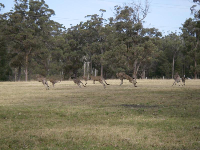 Sydney trip and Mirimbula 122.JPG