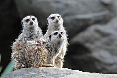 LA Zoo Photo Day Nov 2011