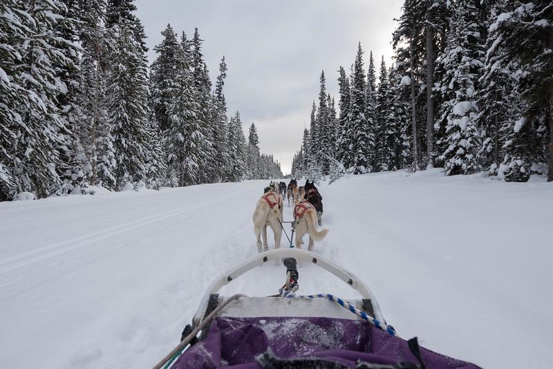 Dogsledding-banff-national-park-alberta-5.jpg