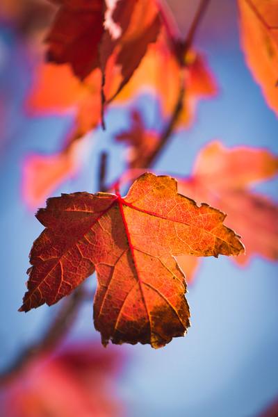 20151024-Fall Colors-94.jpg