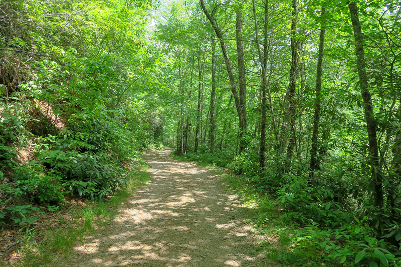 Forest Road 142 -- 2,450'