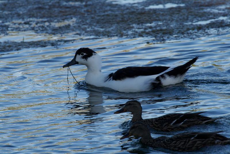 Goose Creek IEA  149 (1).jpg