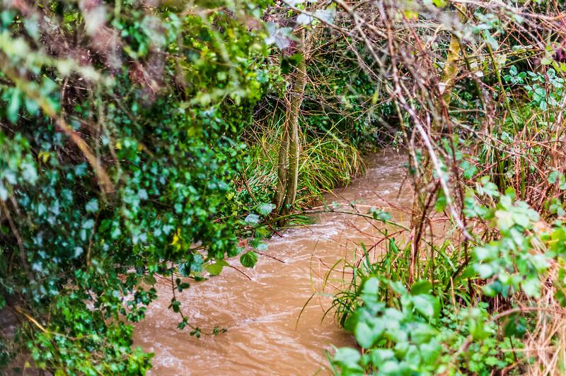 A roaring stream
