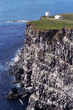 Iceland_June 2014_Latrabjarg Cliffs_Puffins_Seabirds