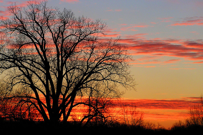 A beautiful sunrise over the backyard of my sisters place (Natarsha) in Indiana. Deep pink clouds run across the skyline in two thick bands, with a leafless tree siloutted in the foreground.