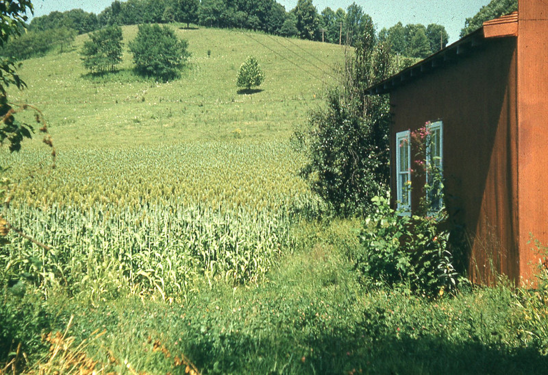 1962-''CANE PATCH IN STICKLEYVILLE''.jpg