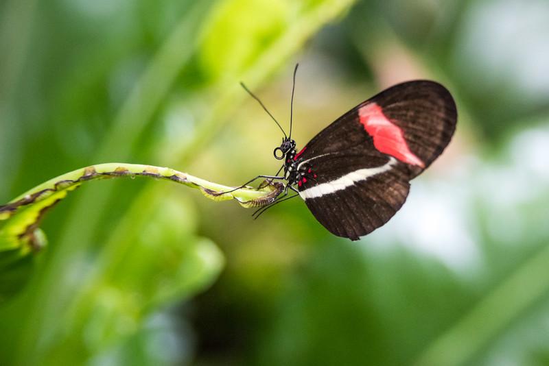 butterfly-82.jpg