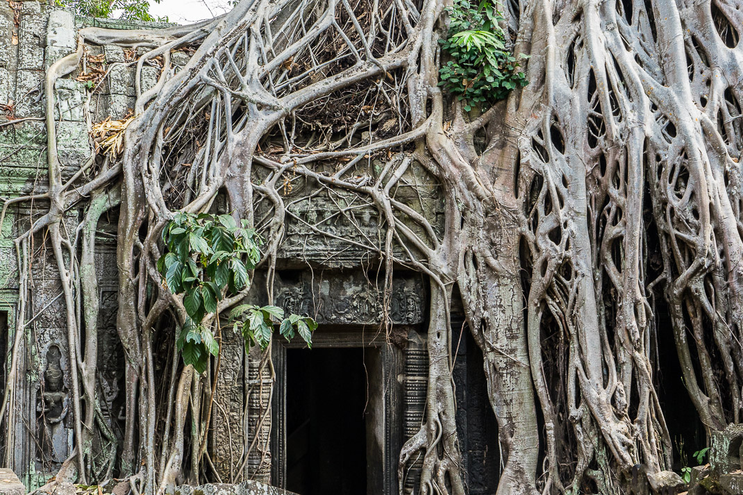 Ta Prohm Root Archway