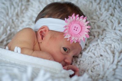 Siegel Newborn Pics