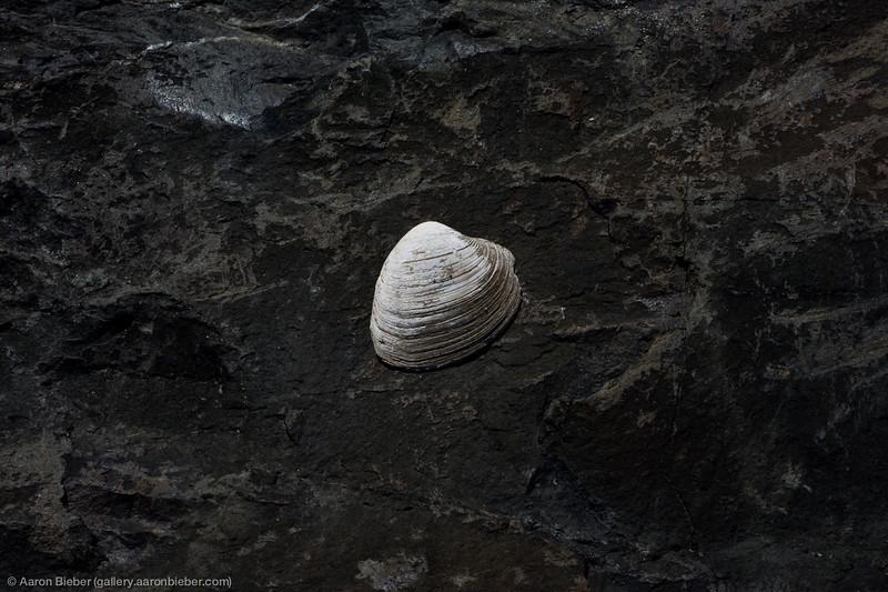 One White Seashell
