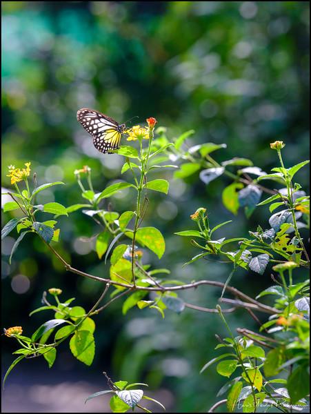 200104 KL Butterfly Park 32.jpg