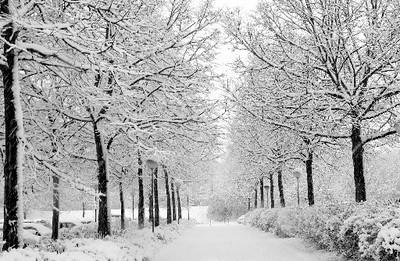 PaljasWinterWeek-1005_winter.jpg