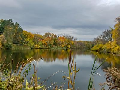 2020 Buckingham Pond