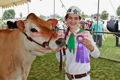 2013 LHVCF Dairy