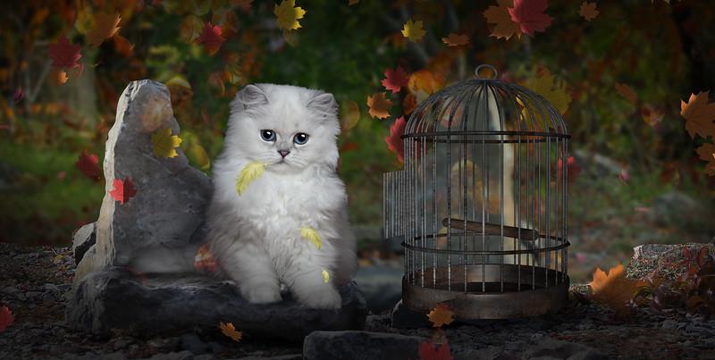 hungry-cat.jpg