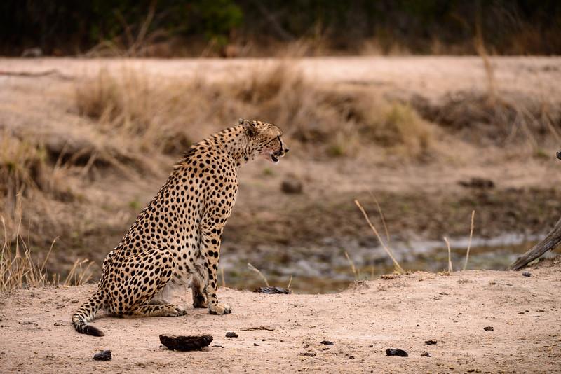 LeopardHills-20150827-5205.jpg